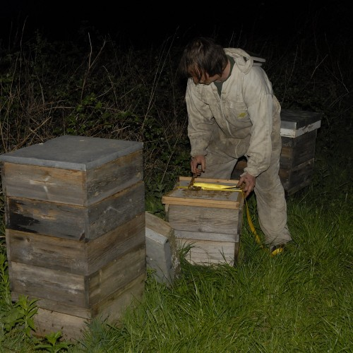 _DSC0011a picking up bees at 4am N. Yorks