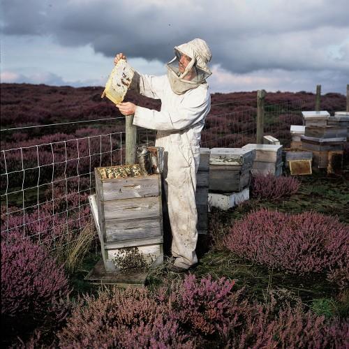 heather_beekeeper